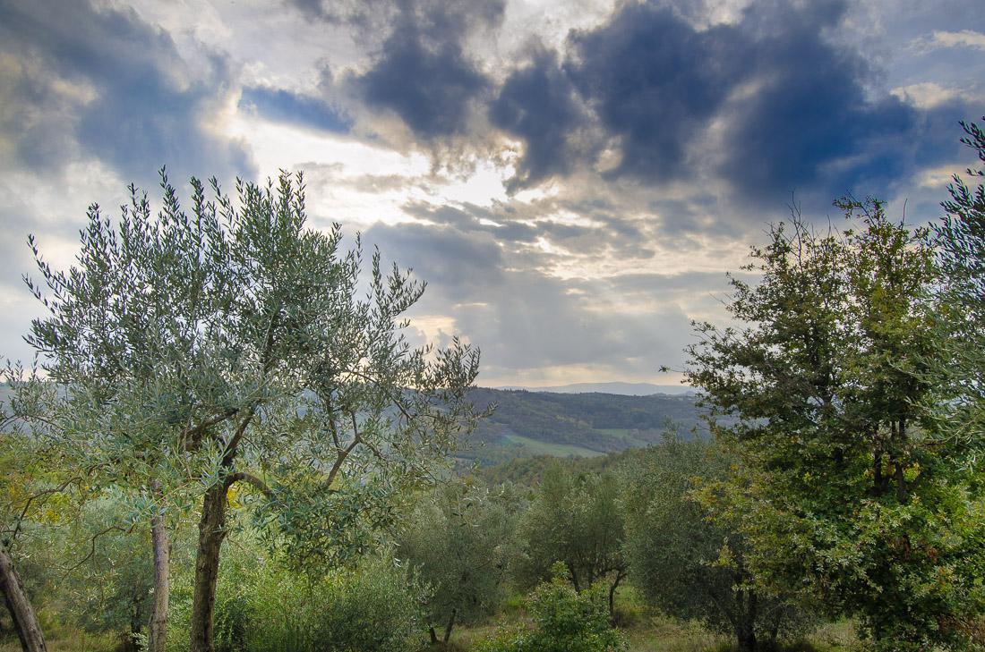 agricola la Dea olivi foto Giovanni Frenda